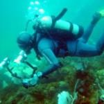 coral_dive_diver_237816_l