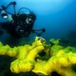 diver-108880